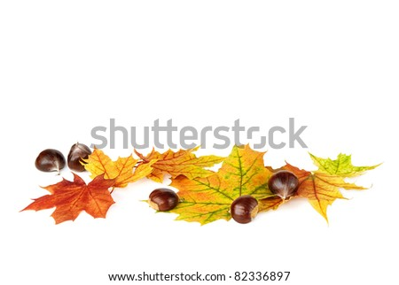 Arrangement of autumn leaves and chestnuts on white background with lots of copy space - stock photo