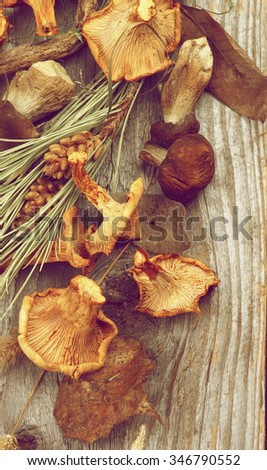 Arrangement of Dried Forest Chanterelles, Porcini and Boletus Mushrooms with Dry Grass, Leafs and Fir Stems closeup in Rustic Wooden background. Retro Styled - stock photo