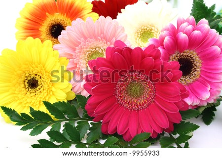 arrangement of gerbera flowers over a white surface - stock photo