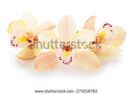 Arrangement of orchid flowers. Isolated on white background. - stock photo