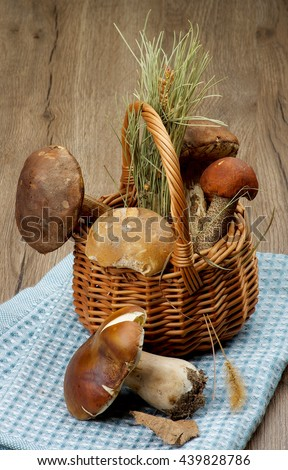 Arrangement of Raw Porcini Mushrooms, Orange-Cap Boletus and Peppery Bolete with Natural Dirties in Wicker Basket on Blue Napkin closeup on Wooden background - stock photo
