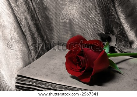 arrangement of rose and old book - stock photo