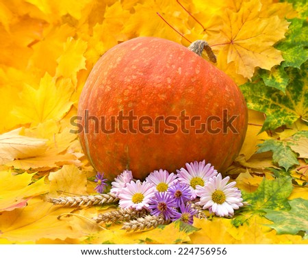 Arrangement of thanksgiving. Pumpkin, chrysanthemums, wild aster and spikes on leafs background - stock photo