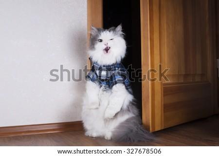 arrogant cat in the apartment door - stock photo