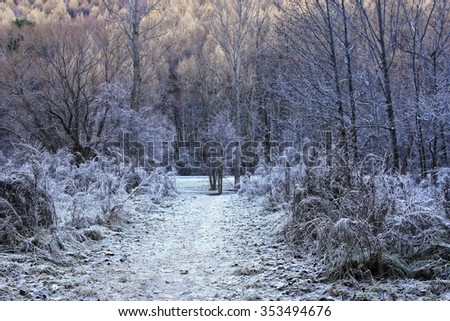 Arrowtown in South Island of New Zealand in the park - stock photo