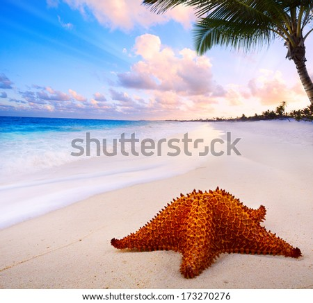 Art beautiful  landscape with Sea star on the beach  - stock photo