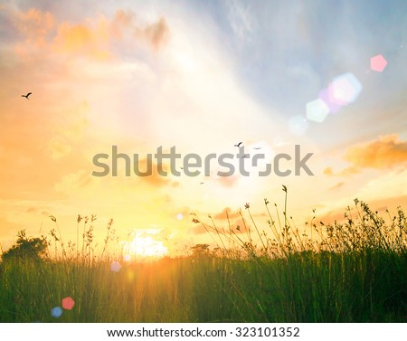 Art Rural Landscape Field Grass. Abstract Meadow Beautiful Bokeh Flare Orange Autumn Sunrise Background Ecology Peaceful Merry Christmas Card Spring Time Good Friday Easter Sunday Flower ray concept. - stock photo