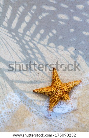 Art Sea star on the beach background - stock photo