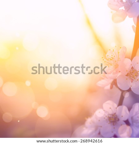 art Spring blossom background. Beautiful nature scene with blooming tree and sun flare. Sunny day. Spring flowers. Beautiful Orchard. Abstract blurred background - stock photo