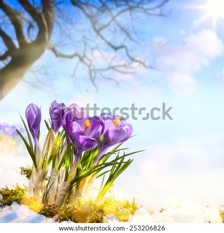 art spring flowers - stock photo