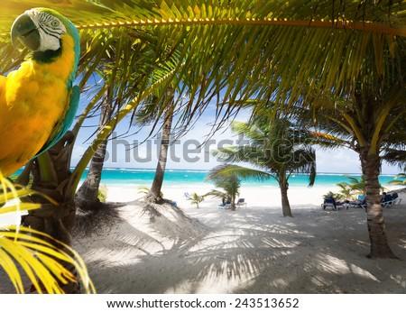 Art Vacation on Caribbean Beach Paradise - stock photo