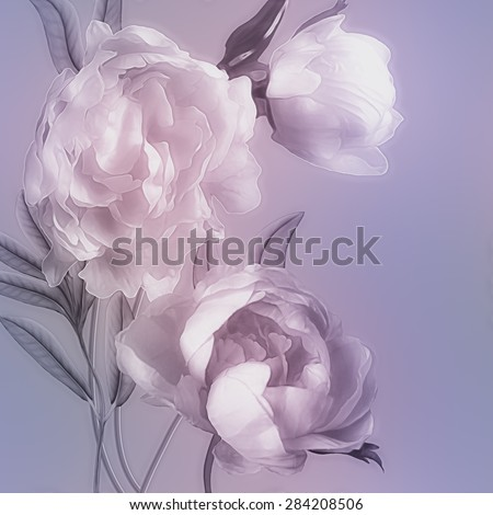 art vintage monochrome watercolor blurred floral pattern with pink and white peonies isolated on lilac background with space for text  - stock photo