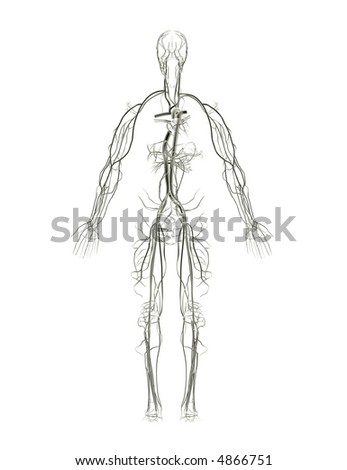 Arteries and Veins X-Ray - stock photo