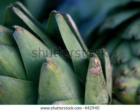 Artichoke Close Up