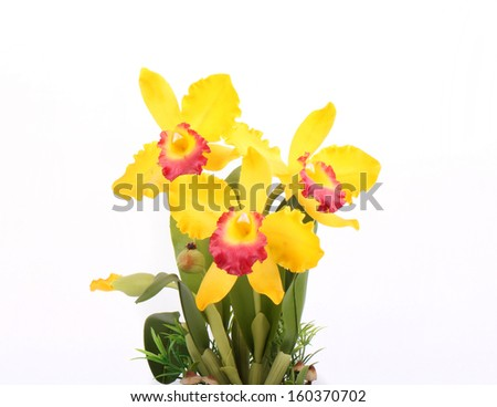 Artificial Cattleya Orchid Flowers in flower pot Isolated on White Background