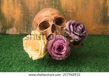 artificial flower, human skull ,Still life - stock photo