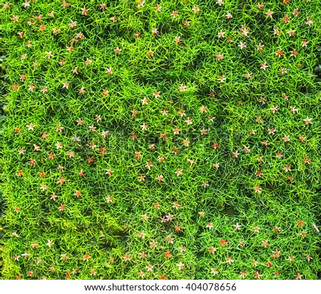 Artificial green grass with small flowers background