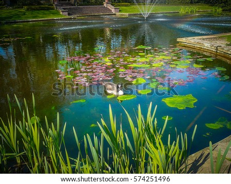 Stock photos royalty free images vectors shutterstock for Artificial pond water