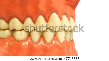 Artificial teeth - stock photo