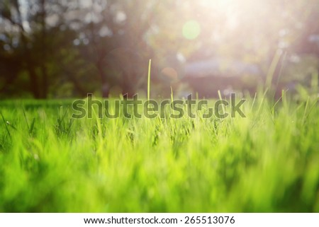 Artistic blurry morning yellow green spring grass with sunlight and flare background. Selective focus used.  - stock photo
