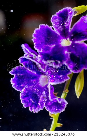 Artistic image of a purple flower with many light points of bokeh - stock photo