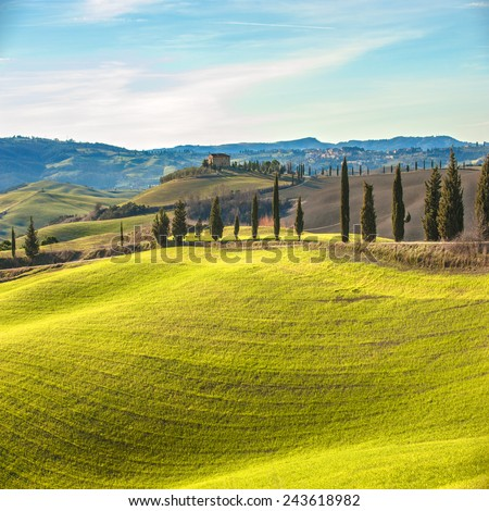 Artistic Tuscan landscape with cypresses, wavy fields and house in the background. - stock photo
