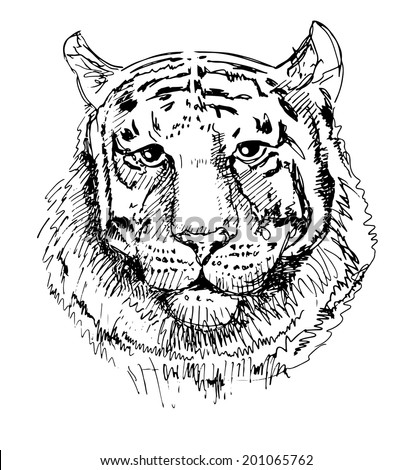 Artwork tiger, sketch black and white drawing, isolated on white background. Head animals raster version - stock photo