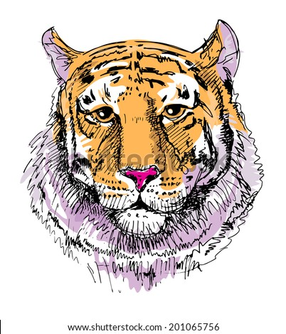 Artwork tiger, sketch drawing, isolated on white background. Head animals raster version - stock photo