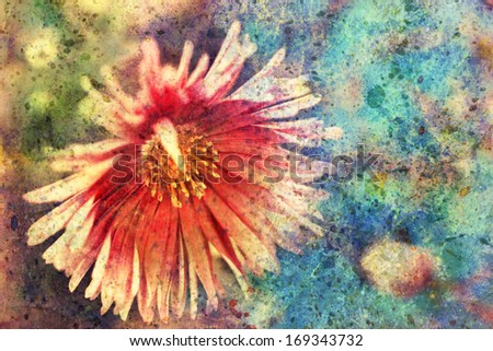 artwork with lovely red aster and watercolor splashes - stock photo