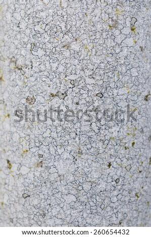 Ash tree bark - stock photo