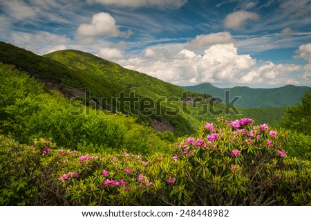 Asheville North Carolina Blue Ridge Parkway Spring flowers scenic mountain landscape in the southern Appalachians - stock photo