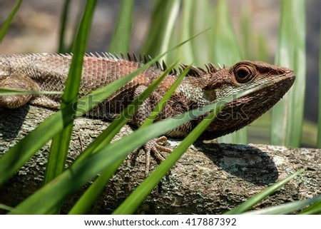 Asia chameleon on tree with nature background - stock photo