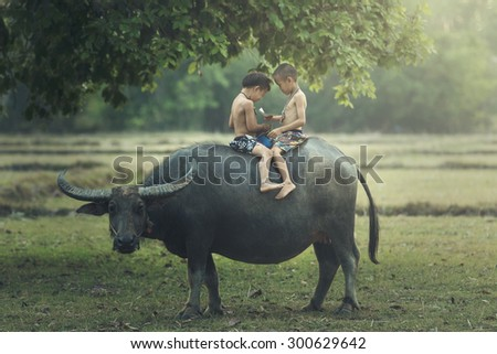 Asia,Thailand,The boys read books on the backs of buffalo in a field. - stock photo