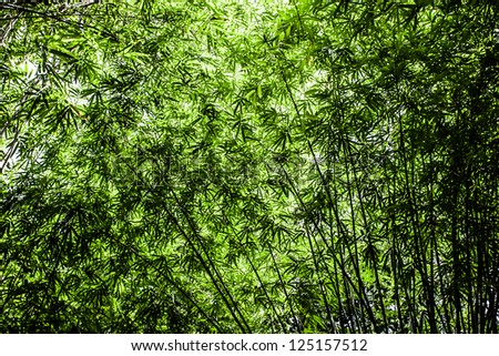 Asian Bamboo forest with morning sunlight. ( HDR image ) - stock photo