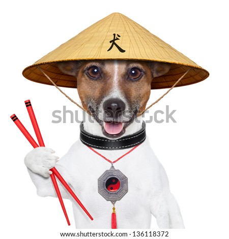 asian dog with chopsticks and asia hat