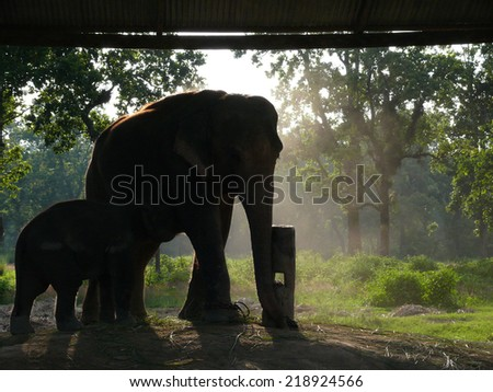 Asian elephant and baby in captivity in the elephant breedery in Chitwan National Park, south Nepal. - stock photo