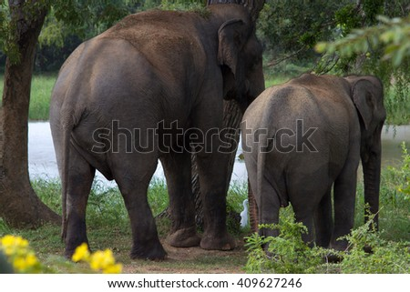Asian elephant and its baby - stock photo