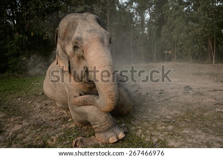 Asian elephant in the dust - stock photo