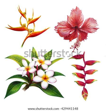 Asian Flowers Heliconia Hibiscus Plumeria Stockillustration ...