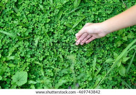 Asian girl hand holding clover leaf in garden, back to nature, love earth, copy space.