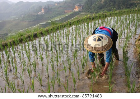 asian male rice farmer at work on a sunny day with a plow in the background - stock photo