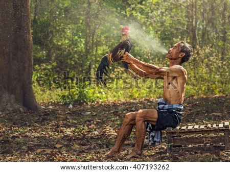 Asian old man blowing water to Thai gamecock for cleaning, Countryside Lifestyle concept