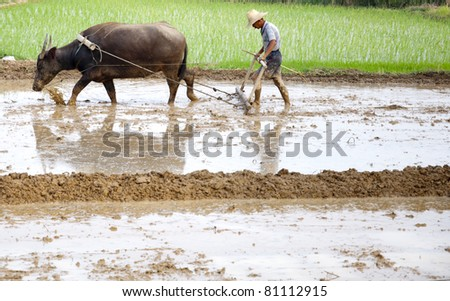 Asian peasantry use water buffalo to plow - stock photo