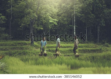 Asian, The boys and girl on  Rice farm in countryside of thailand. - stock photo