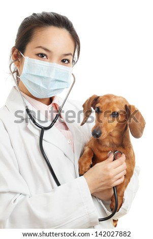 Asian veterinarian with dachshund dog - stock photo