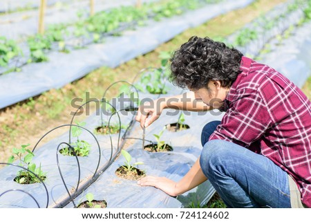Asian young farmer using drip irrigation system in vegetable garden,organic farm