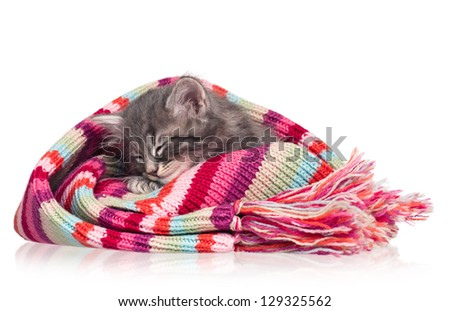 Asleep little kitten in the knitted scarf isolated on white background - stock photo