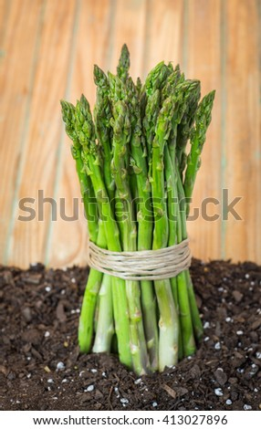 Asparagus, or garden asparagus, scientific name Asparagus officinalis, is a spring vegetable, a flowering perennial plant species in the genus Asparagus.