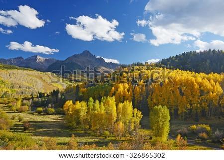 aspen in autumn at san juan mountains colorado - stock photo