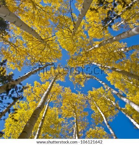 Aspen Sky - stock photo
